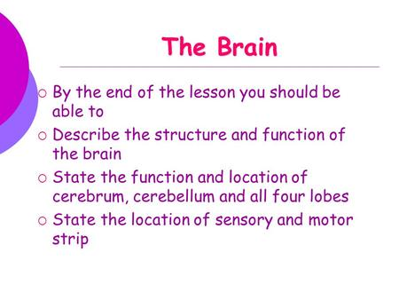 The Brain  By the end of the lesson you should be able to  Describe the structure and function of the brain  State the function and location of cerebrum,