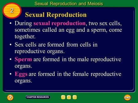 Sexual Reproduction During sexual reproduction, two sex cells, sometimes called an egg and a sperm, come together. Sex cells are formed from cells in reproductive.