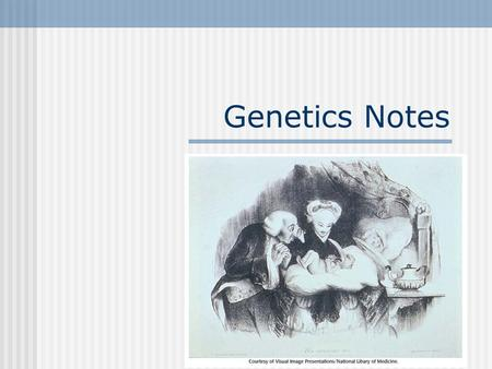 Genetics Notes Review… DNA contains information on how to make you. You are made of proteins which are made of amino acids.