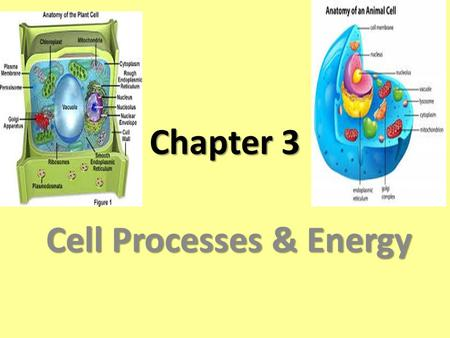 Chapter 3 Cell Processes & Energy. Element any substance that cannot be broken down into simpler substances. ATOM Smallest unit of an element is an ATOM.
