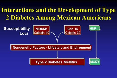 Interactions and the Development of Type 2 Diabetes Among Mexican Americans NIDDM1 Calpain 10 Chr. 15 Calpain 3? Nongenetic Factors - Lifestyle and Environment.
