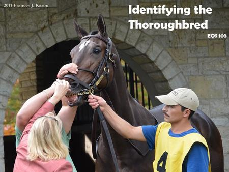 Identifying the Thoroughbred