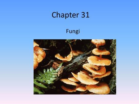 Chapter 31 Fungi. Intro to Fungi Eukaryotes Most are multicellular Were once thought to be plants – Recent molecular studies show that they are more closely.