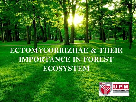ECTOMYCORRIZHAE & THEIR IMPORTANCE IN FOREST ECOSYSTEM