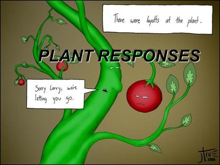 PLANT RESPONSES. Syllabus links 3.5.2 Responses in the Flowering Plant Growth regulation.