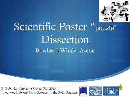 " Scientific Poster "" puzzle"" Dissection Bowhead Whale- Arctic E. Eubanks- Capstone Project Fall 2013 Integrated Life and Earth Sciences in the Polar Regions."
