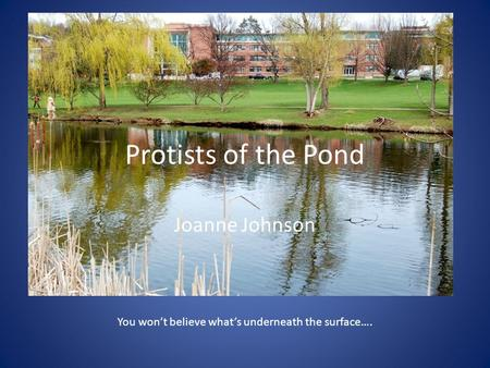 Protists of the Pond Joanne Johnson You won't believe what's underneath the surface….