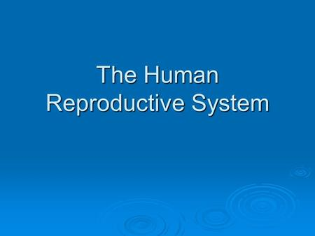 The Human Reproductive System. Female Reproductive System  Anatomy  Ovaries Responsible for bringing ova to maturityResponsible for bringing ova to.