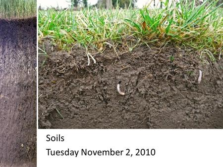Soils Tuesday November 2, 2010 Soils. Chapter 5 Section 2: Soil What is soil? Soil is part of the ___________ that supports the ___________ of plants.