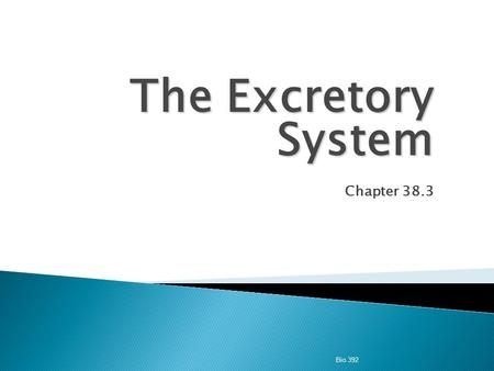 The Excretory System Chapter 38.3 Bio 392.  Excretion  the process of eliminating waste products of metabolism and other non-useful materials.  The.