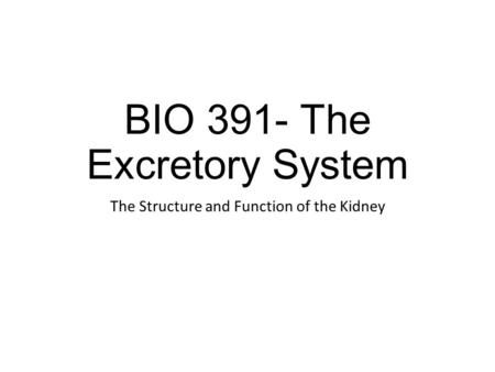 BIO 391- The Excretory System The Structure and Function of the Kidney.