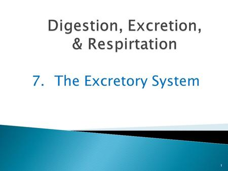 7.The Excretory System 1. Once food leaves the small intestine, most of its usable parts have been removed 2 Only waste products and extra water are left.