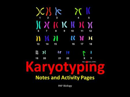 Karyotyping Notes and Activity Pages PAP Biology.