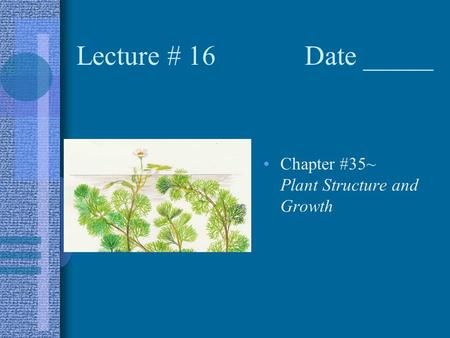 Lecture # 16 Date _____ Chapter #35~ Plant Structure and Growth.