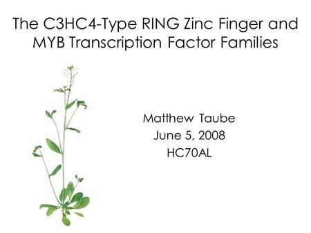 The C3HC4-Type RING Zinc Finger and MYB Transcription Factor Families Matthew Taube June 5, 2008 HC70AL.