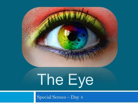 The Eye Special Senses – Day 4. Eye and Sense of Sight  Vision system  Eyes  Optic nerves  Vision centers in the brain  Accessory structures  Eye.