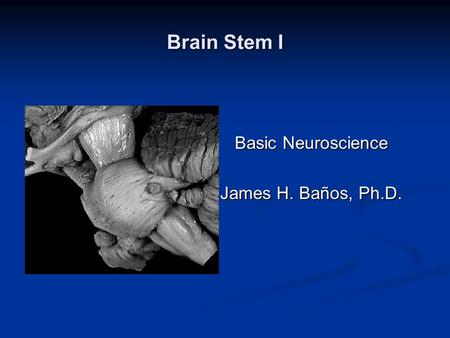 Brain Stem I Basic Neuroscience James H. Baños, Ph.D.