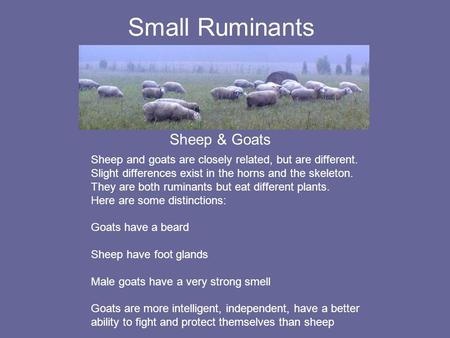 Small Ruminants Sheep & Goats Sheep and goats are closely related, but are different. Slight differences exist in the horns and the skeleton. They are.