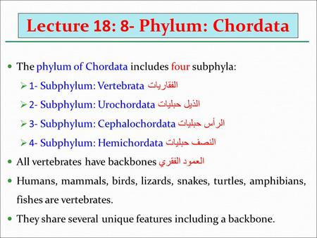 Lecture 18: 8- Phylum: Chordata