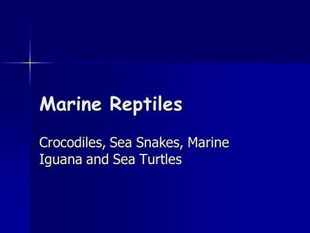 Marine Reptiles Crocodiles, Sea Snakes, Marine Iguana and Sea Turtles.