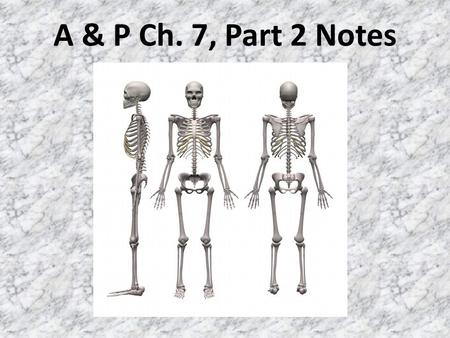 A & P Ch. 7, Part 2 Notes. I. Vertebral Column A.Extends from the skull to the pelvis; forms the vertical axis of skeleton B.Vertebrae are separated by.