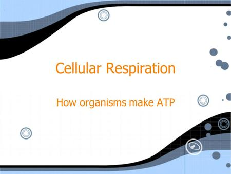 Cellular Respiration How organisms make ATP. Cellular Respiration The process that produces energy (ATP) by breaking down food molecules 6O 2 + C 6 H.