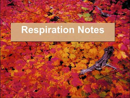 Respiration Notes. I. Overview A. Photosynthesis takes place in the chloroplasts B. Respiration takes place in the mitochondria.
