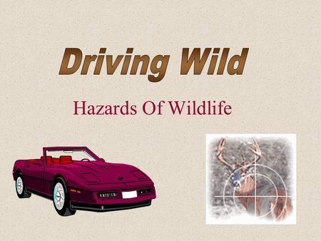 Hazards Of Wildlife. Car / Deer Collision Facts What Are the Facts? Although most car-deer collisions occur between the months of October and December,