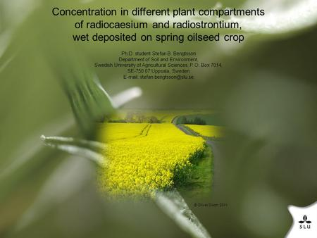 Concentration in different plant compartments of radiocaesium and radiostrontium, wet deposited on spring oilseed crop Ph.D. student Stefan B. Bengtsson.