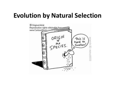 What Does Darwin S Theory Of Natural Selection State