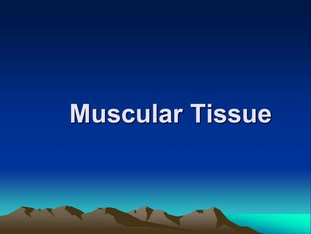 Muscular Tissue Muscular Tissue General description 1) components: ---cell: muscle fiber--myofiber elongated thread-liked sarcolemma sarcoplasm SER :