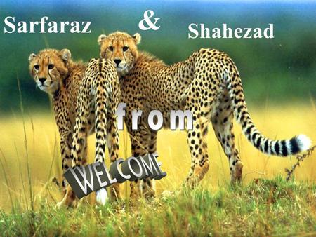Sarfaraz & Shahezad. Presentation on Mass customization Prepared by: Sarfaraz shaikh & Shahezad Ahemed.