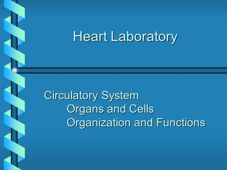 Heart Laboratory Circulatory System Organs and Cells Organization and Functions.