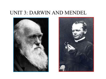 UNIT 3: DARWIN AND MENDEL. I. Darwin's Contributions.