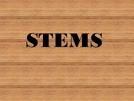 STEMS. SO WHAT DO WE ALREADY KNOW????? Stems exist for three reasons To produce leaves, branches and flowers To hold leaves up to the sunlight To transport.