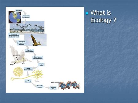 What is Ecology ? What is Ecology ?. Population Population = Group of same species living in same area Population = Group of same species living in same.