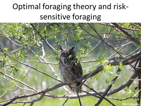 Optimal foraging theory and risk- sensitive foraging Matt Begley.