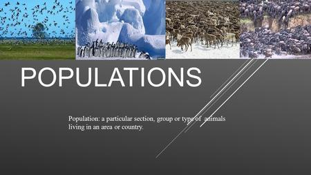POPULATIONS Population: a particular section, group or type of animals living in an area or country.