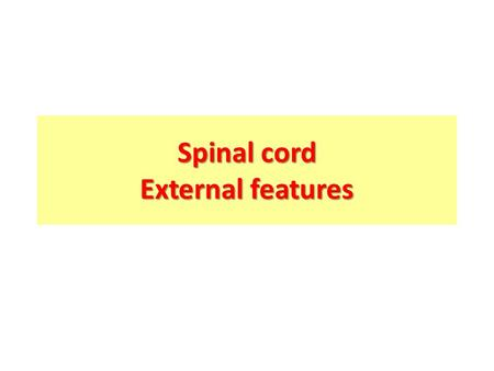Spinal cord External features. Objectives Describe the gross anatomical features of the spinal cord. Describe the level of the different spinal segments.