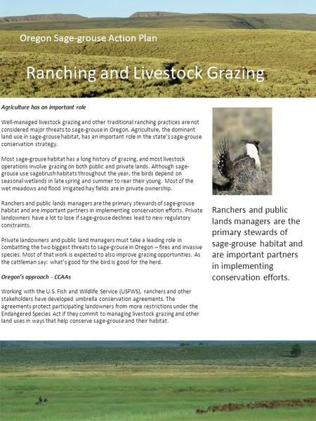 Agriculture has an important role Well-managed livestock grazing and other traditional ranching practices are not considered major threats to sage-grouse.