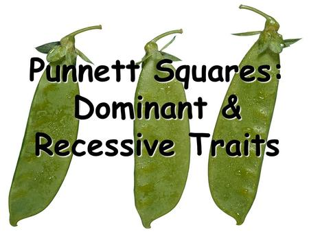 "Punnett Squares: Dominant & Recessive Traits. Gregor Mendel is often called the ""Father of Genetics""."