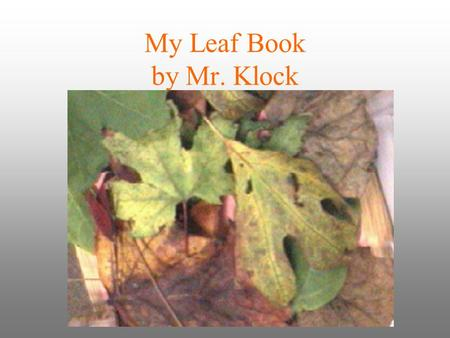 My Leaf Book by Mr. Klock.