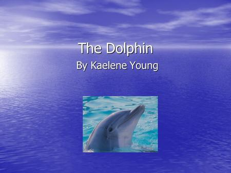 The Dolphin By Kaelene Young.