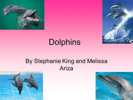 Dolphins By Stephanie King and Melissa Ariza. Impact Humans have an impact on dolphins because when humans pollute and destroy the environment, and the.