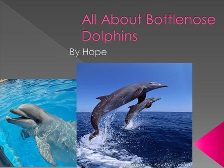 My name is Hope and my animal is a bottlenos e dolphins.