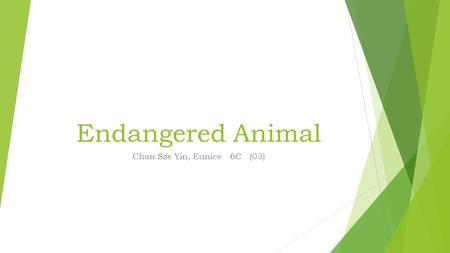 Endangered Animal Chan Sze Yin, Eunice 6C (03). Now, I'm going to introduce an endangered animal to you, it is a Chinese White Dolphin.