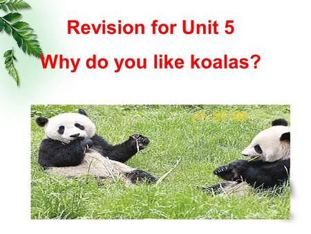 Revision for Unit 5 Why do you like koalas?. What's your favorite animal? Why do you like them? Where are they from? What do they like eating? What other.