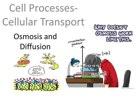 Osmosis and Diffusion Cell Processes- Cellular Transport.