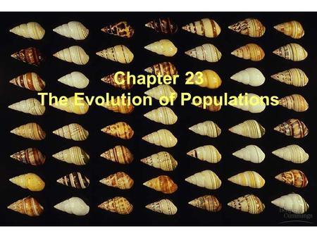Chapter 23 The Evolution of Populations. A. Population Genetics 1. Combines Darwinian selection and Mendelian inheritance a. Population genetics is.