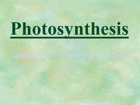 Photosynthesis. §Food supply factory §Adapted to maximize light absorption and CO 2 diffusion.